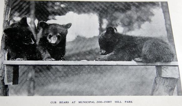 bears 001
